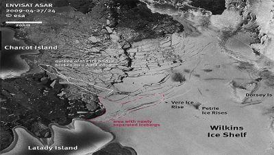 Novas imagens de satélites divulgadas pela agência espacial européia confirmam que centenas de icebergs começaram a eclodir na frente norte da plataforma de gelo de Wilkins, na Antártida, indicando que a gigantesca placa de gelo tornou-se extremamente instável. O evento é consequência direta do colapso da estreita ponte de gelo que ligava o continente à ilha Charcot, no início de abril.